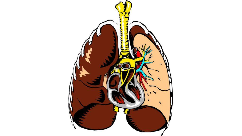 Lage des Herzens (Mensch)
